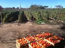 Farms and Acreages for Sale in Carretera Internacional Sur, Mazatlan, Sinaloa $8,000,000