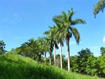 Lots and Land for Sale in Los Angeles , Atenas, Alajuela $55,000