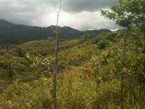 Lots and Land for Sale in Yayales, Adjuntas, Puerto Rico $325,000
