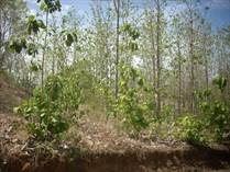 Lots and Land for Sale in Santa Rosa, Tamarindo, Guanacaste $38,000