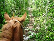 Lots and Land for Sale in Tulum, Coba, Quintana Roo $49,900