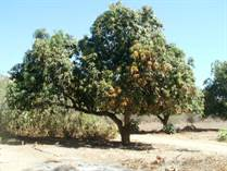 Farms and Acreages for Sale in Las Cuevas, Baja California Sur $600,000
