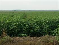 Farms and Acreages Sold in Childress County, CHILDRESS, Texas $313,000