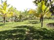 Farms and Acreages for Sale in Blackman Eddy, Cayo District, Cayo $175,000