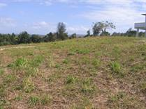 Farms and Acreages for Sale in Bo. Puntas, Rincon, Puerto Rico $460,000