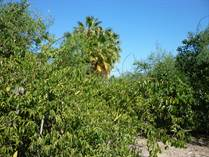 Lots and Land for Sale in Las Barracas, Cabo pulmo, Baja California Sur $1,500,000