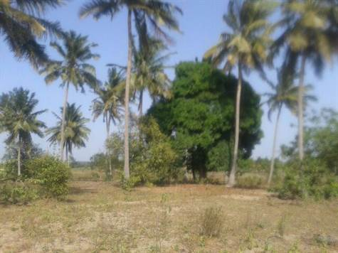 Agricultural farm land for sale in Kwale County